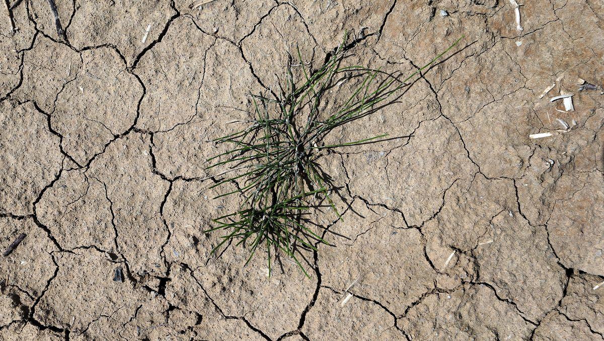 Gras wächst auf trockenem und rissigem Ackerboden eines Blaukrautfeldes im bayrischen Hausen. Das Klima bleibt auch in Zeiten von Corona wichtig.