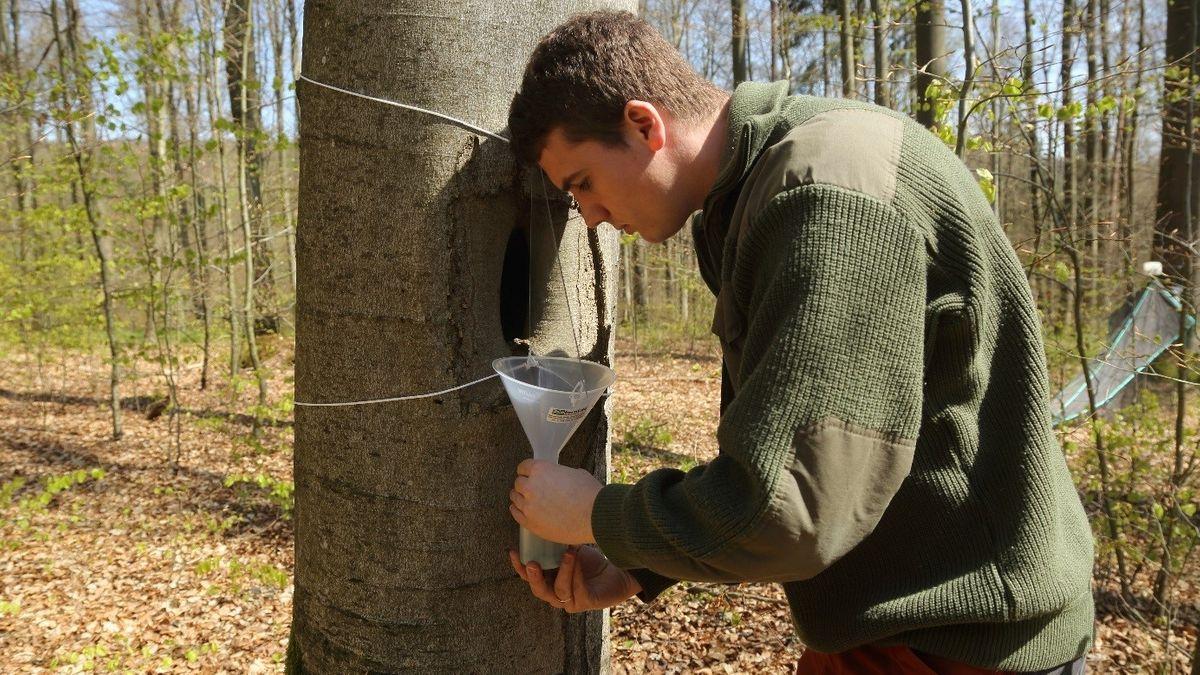 Simon Thorn im Wald mit einer Insektenfalle an einem Baum