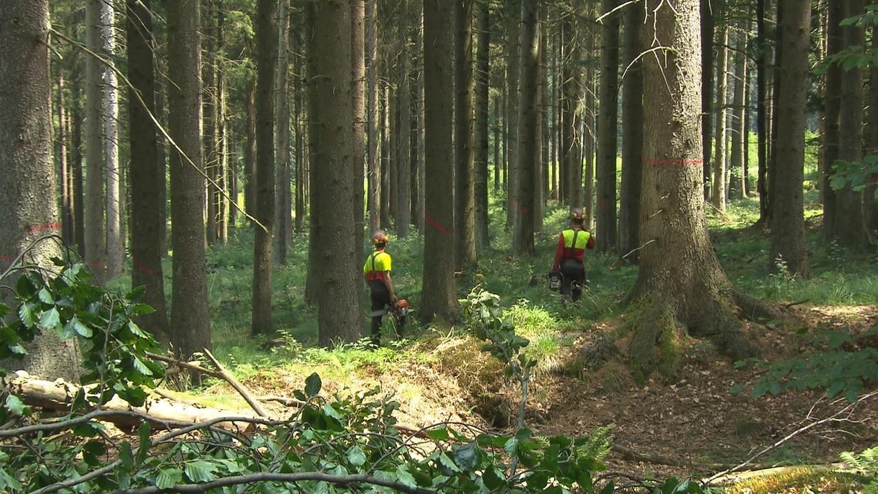Forstbewirtschaftung in Bayern