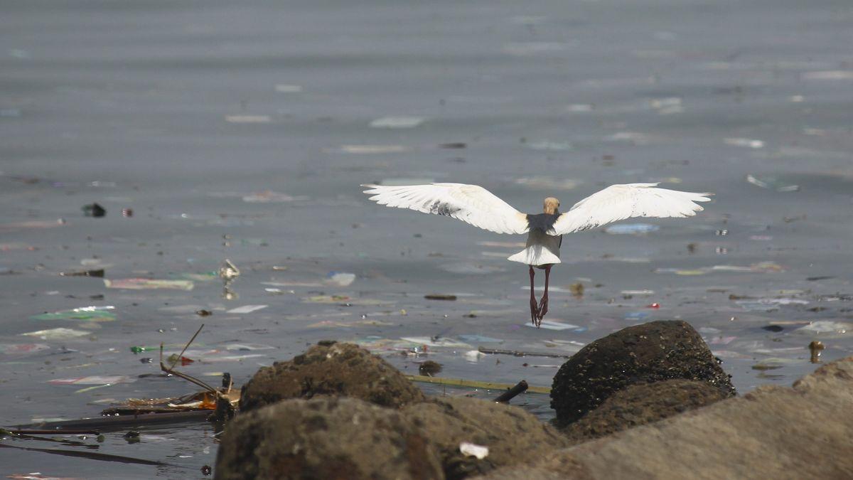 Kranich an der Nordküste der indonesischen Stadt Jakarta über Wasser, das mit Plastik verschmutzt ist.