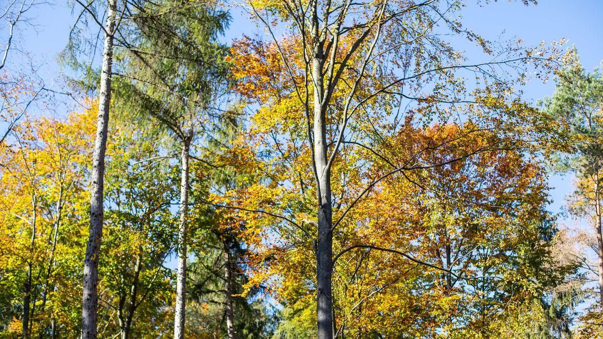 Herbstlandschaft im Steigerwald