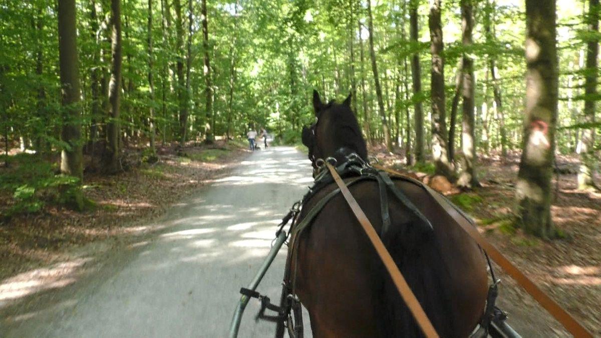 Eine Kutsche fährt auf einem Waldweg (Symbolbild)