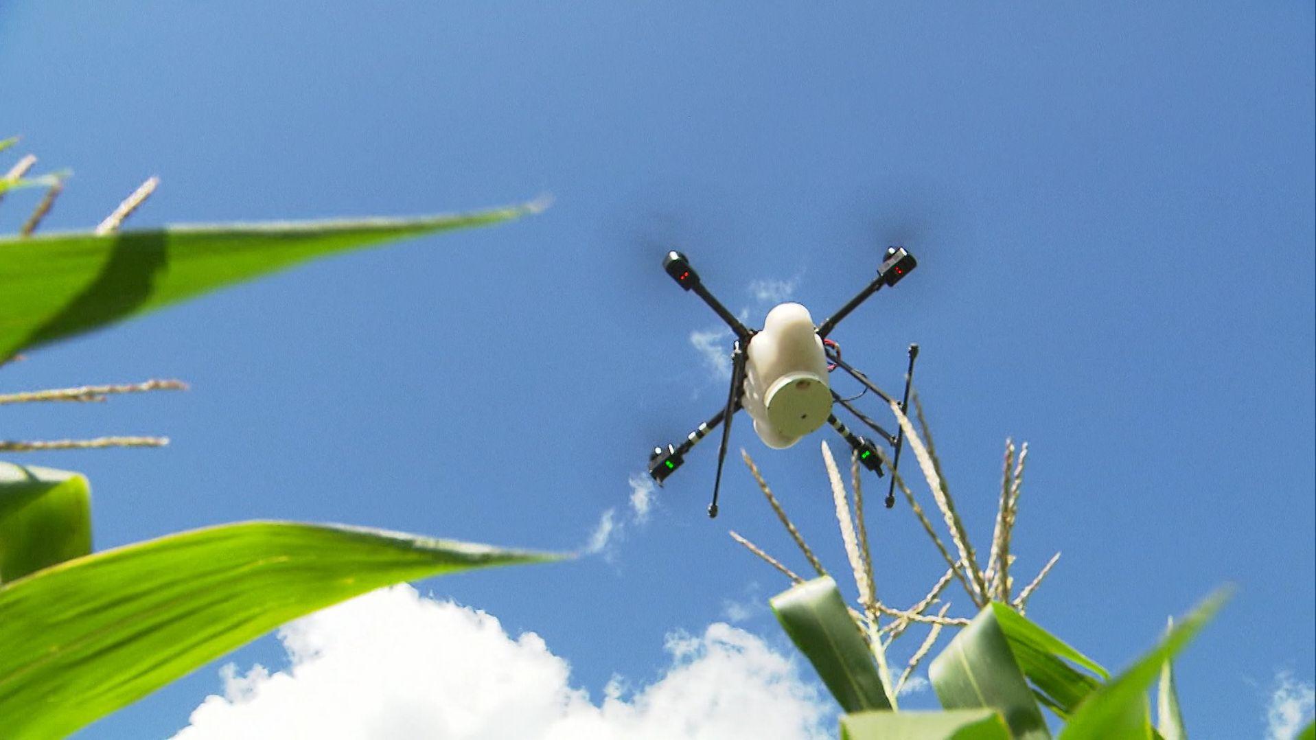Schädlingsbekämpfung per Drohne