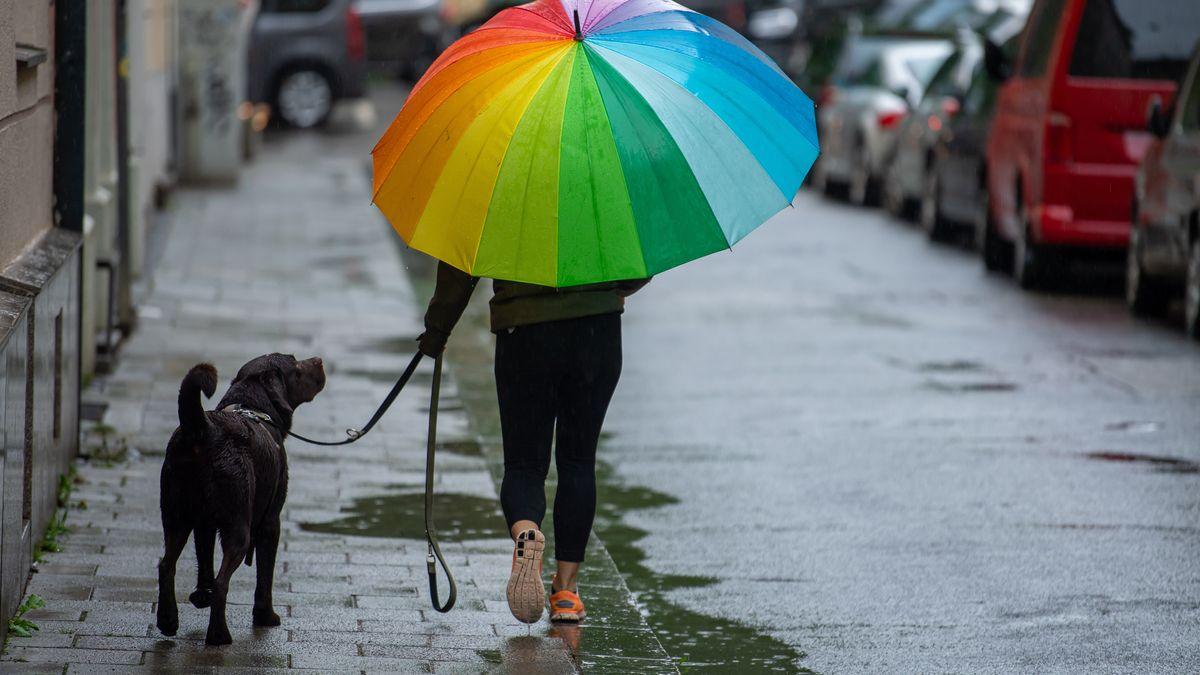 Die nächsten Tage angesagt: Gassigehen bei Hundewetter