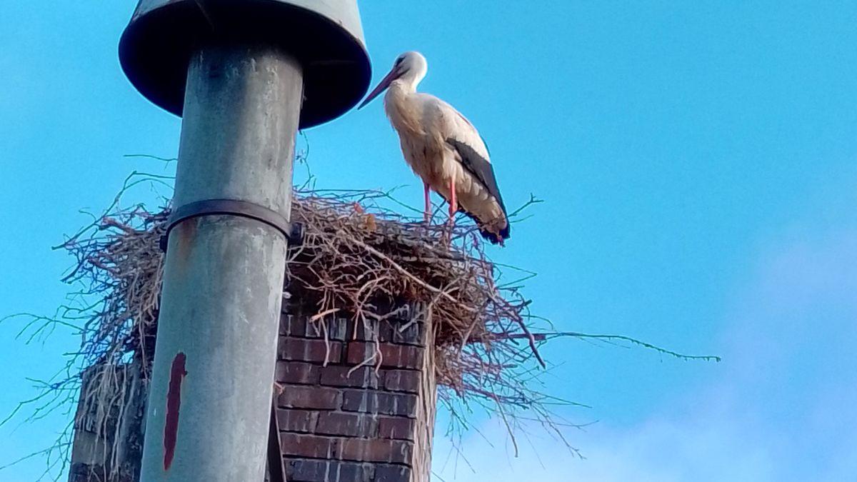 Ein Storch sitzt in seinem Nest in einem Schornstein