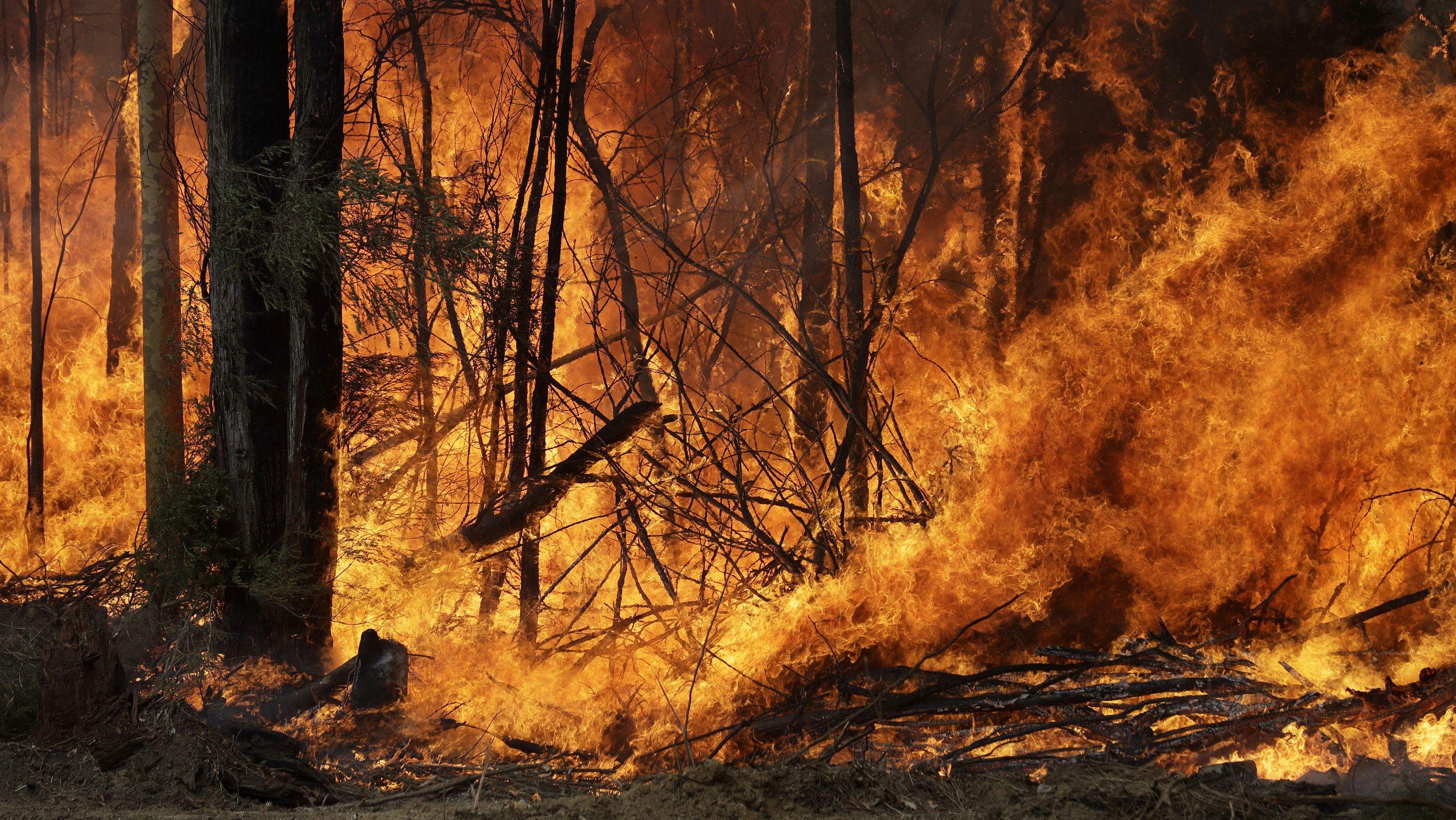Seit Herbst letzten Jahres brennen verheerende Feuer in Australien.