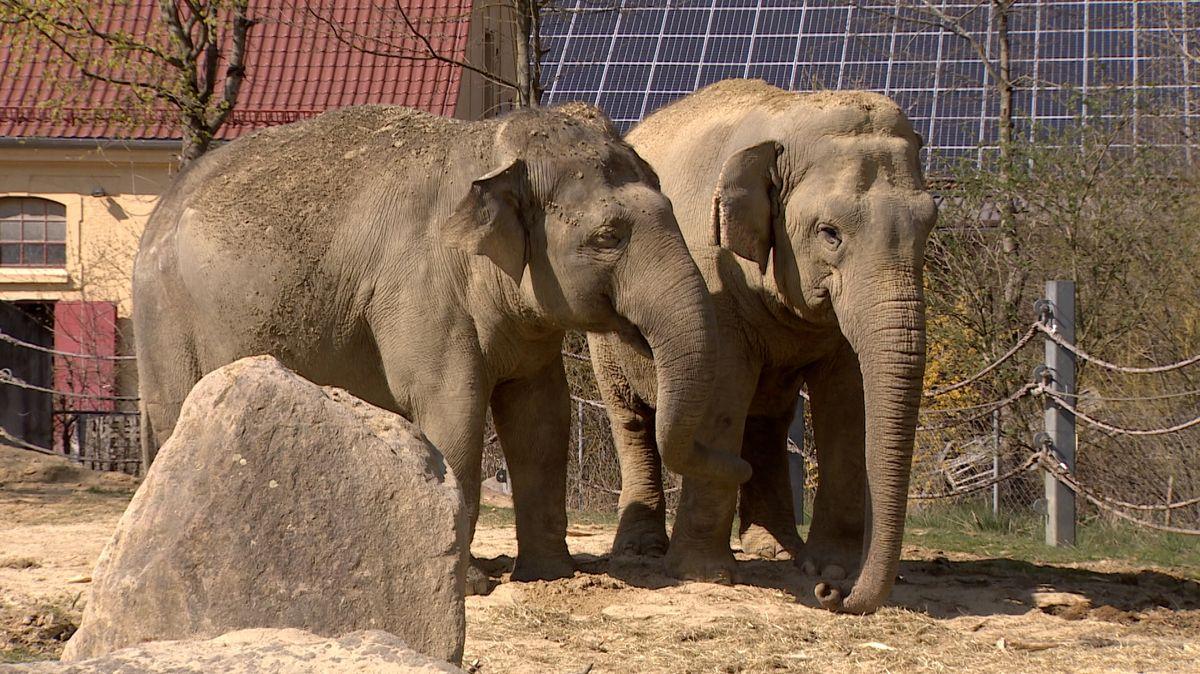 Waren langjährige Gefährtinnen: Die Asiatischen Elefantendamen Burma und Targa im Augsburger Zoo.