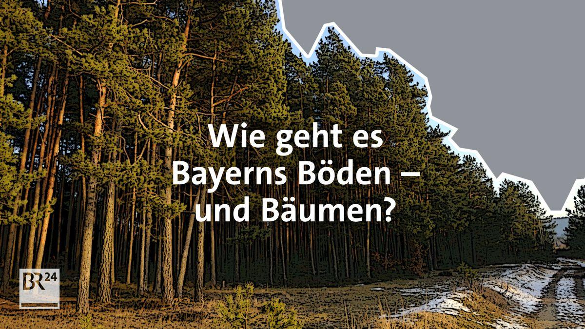 #fragBR24💡 Wie geht es Bayerns Böden – und Bäumen?
