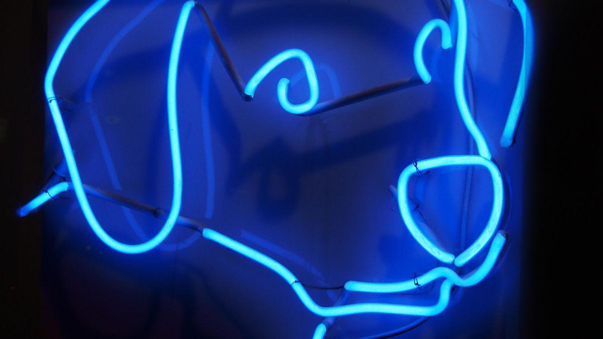 Hund in blauem Neon
