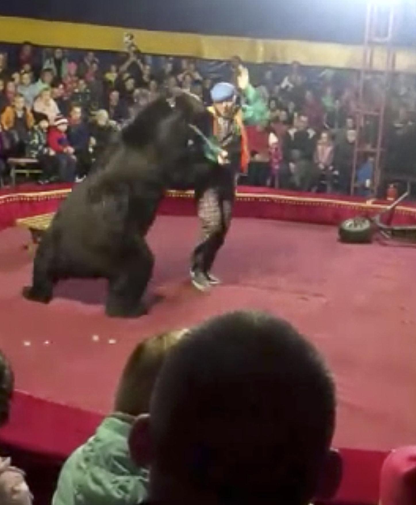Schock bei Zirkus-Show in Russland: Bär fällt Dompteur an