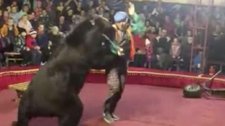 Russland: Bärenangriff im Zirkus.