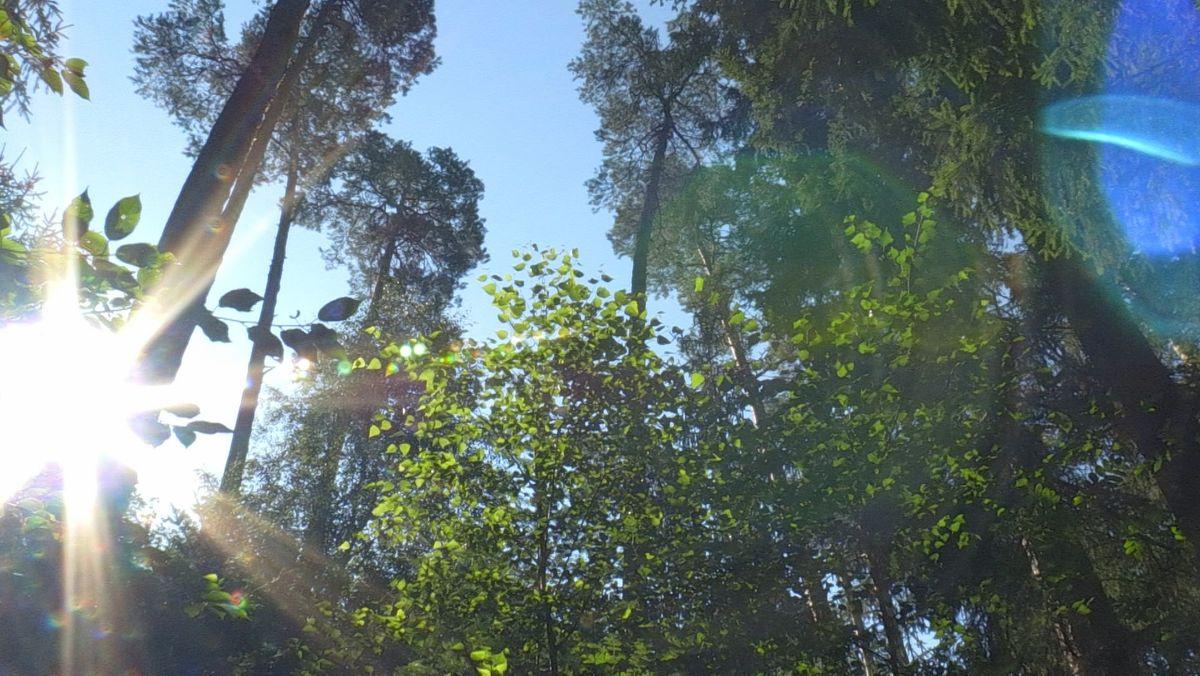 Zukunftsfähige Wälder müssen resistent gegen Trockenheit und Schädlingsbefall sein - dafür braucht es neue Baumarten.