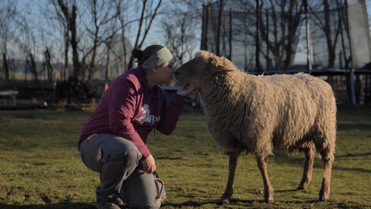 Besitzerin der Alten Mühle mit Schaf auf der Weide