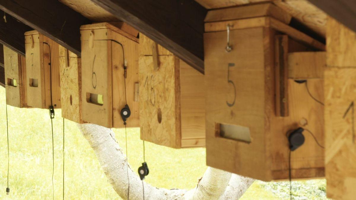 In mehr als 30 Nistkästen rund ums Haus finden Mauersegler-Pärchen ihre Brutstätte