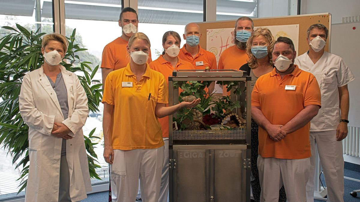 Ärzte und Pfleger stehen neben einem Terrarium, in dem sich drei Achatschnecken befinden