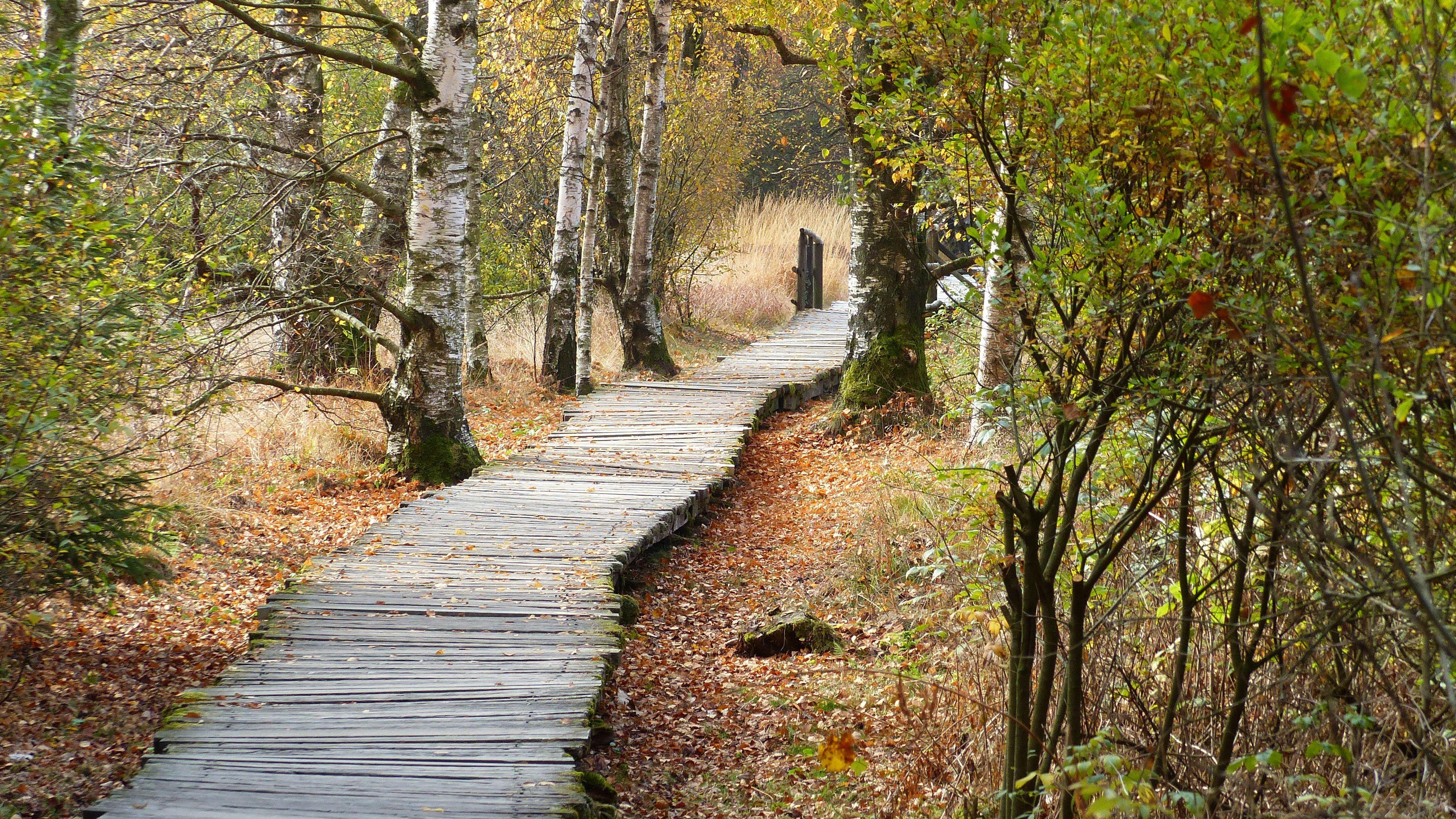 Schwarzes Moor in der Rhön leidet unter Klimawandel