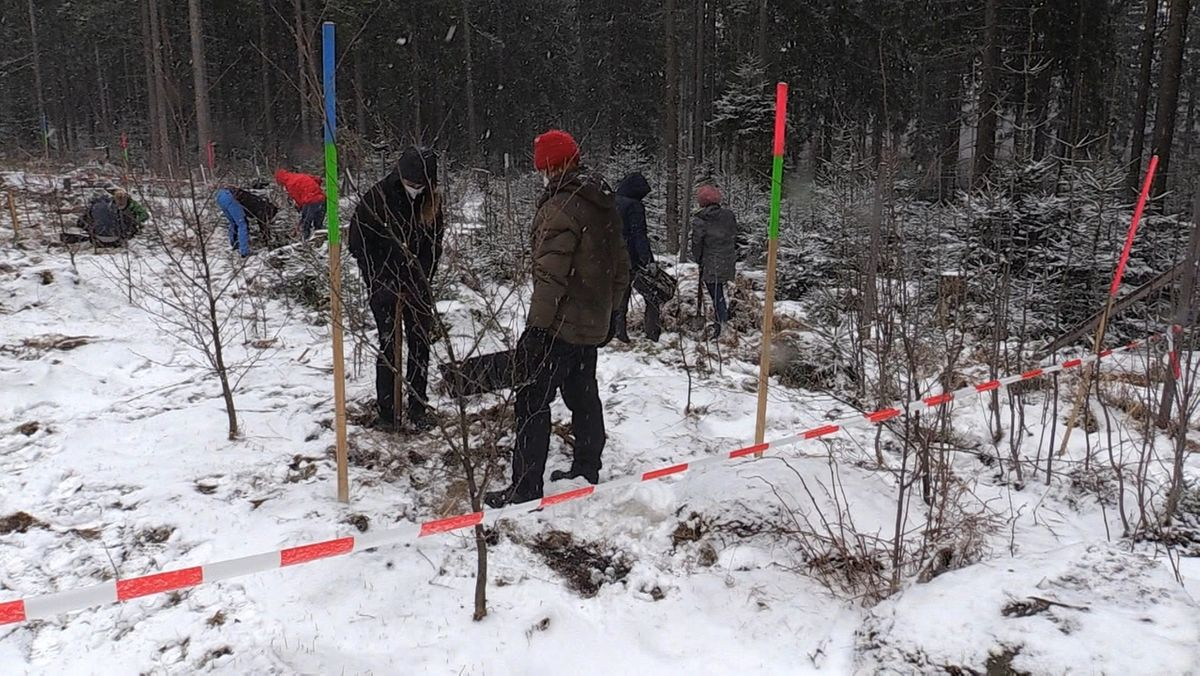 Baumpflanzungsaktion im Fichtelgebirge