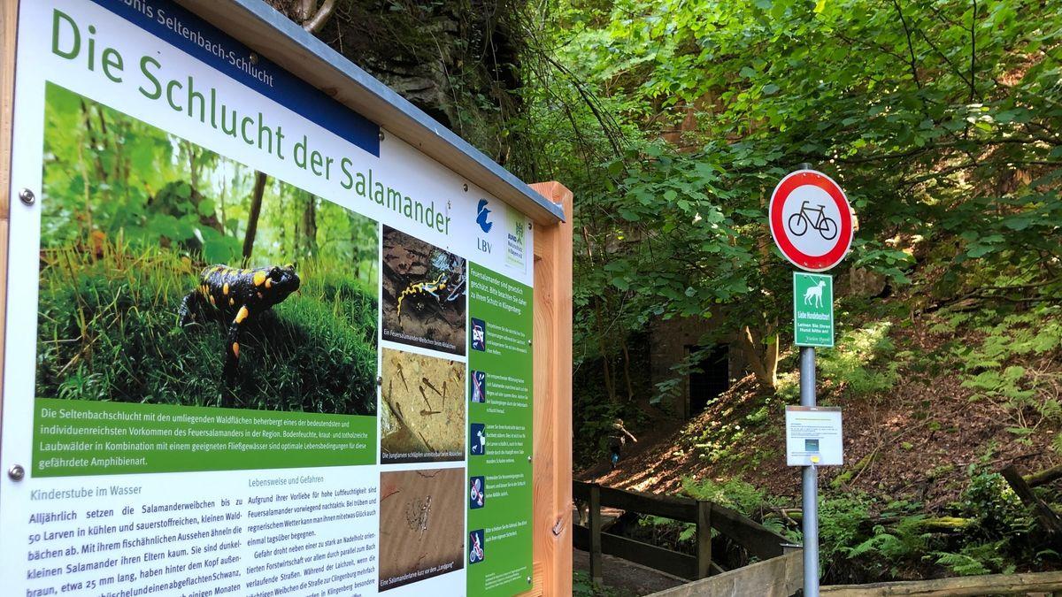 Unterwegs in der Seltenbachschlucht