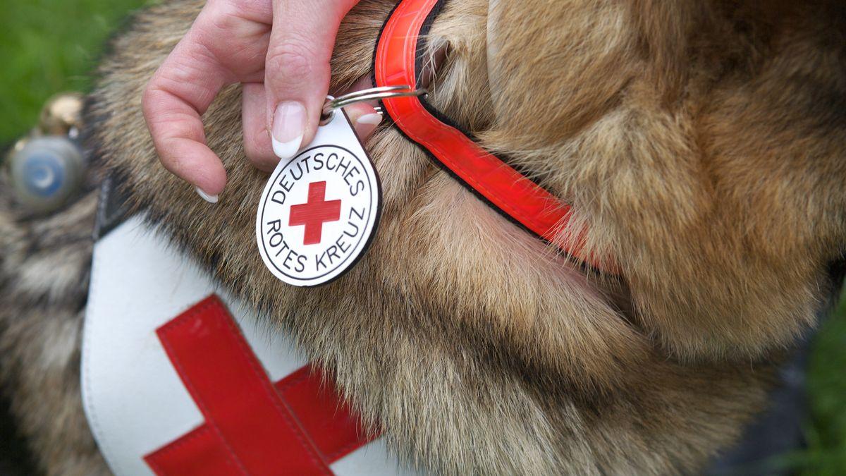 Rettungshunde-Ausbildung beim DRK (Symbolbild)