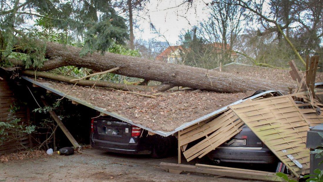 Ein umgestürzter Baum liegt in Viersen (Nordrhein-Westfalen) auf Unterstellplätzen von Autos.