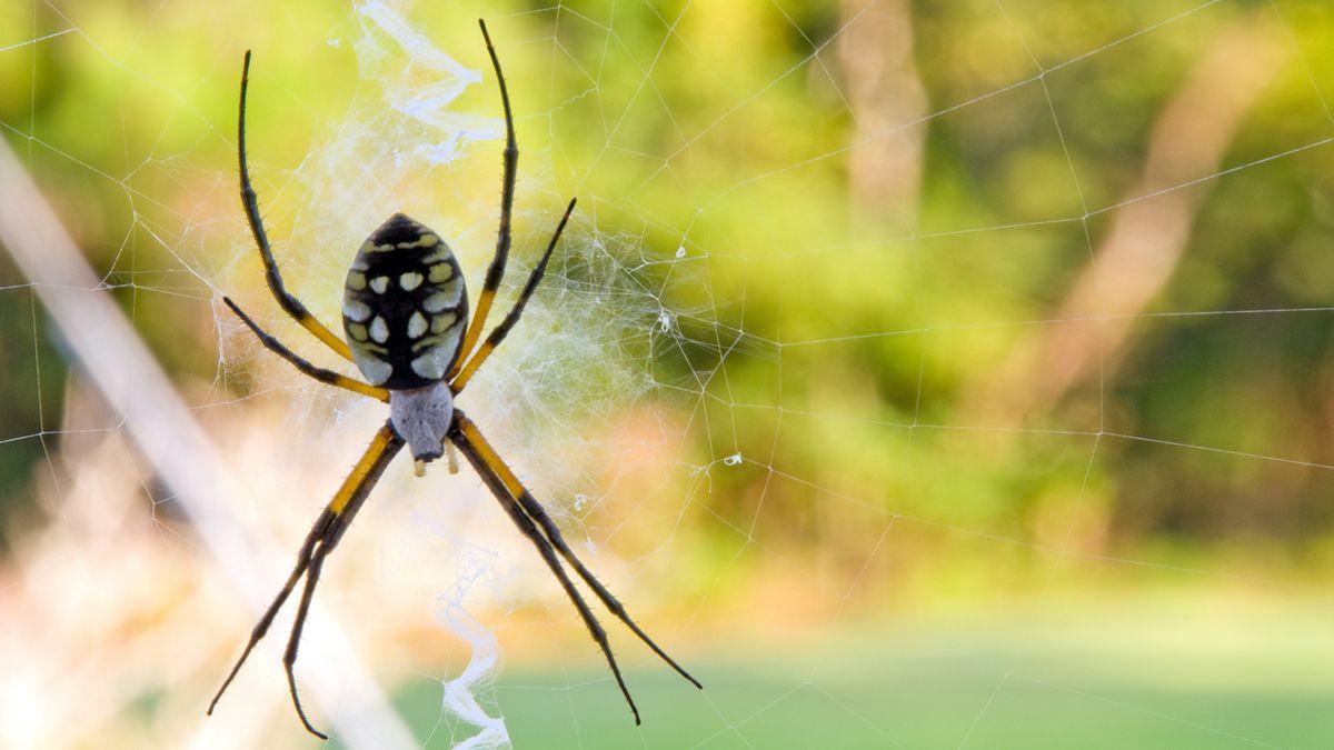 Spinnenseide