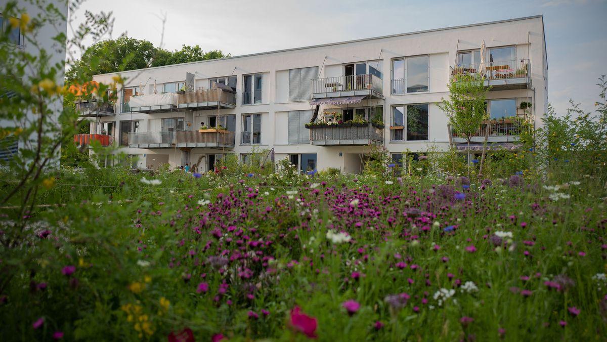 Wildblumenwiese vor einem Mehrfamilienhaus.