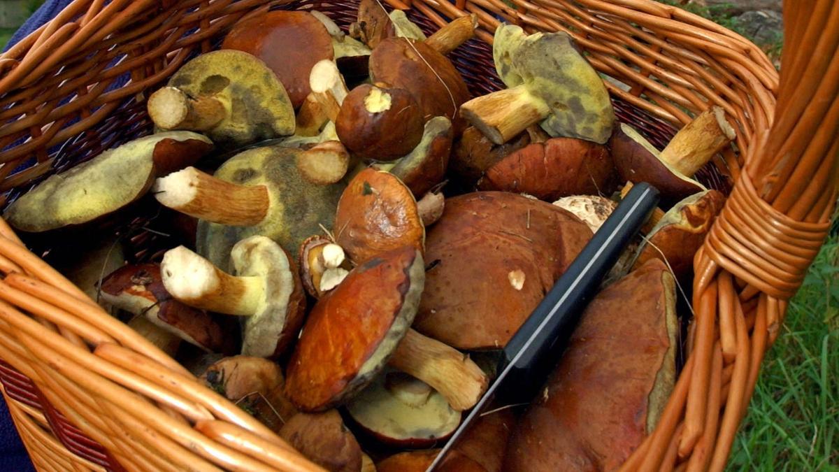 Ein Korb mit Pilzen