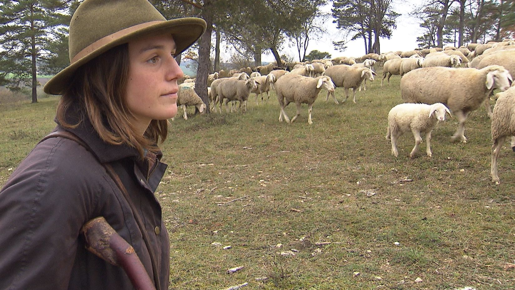 Edith Amann hütet ihre Schafsherde.