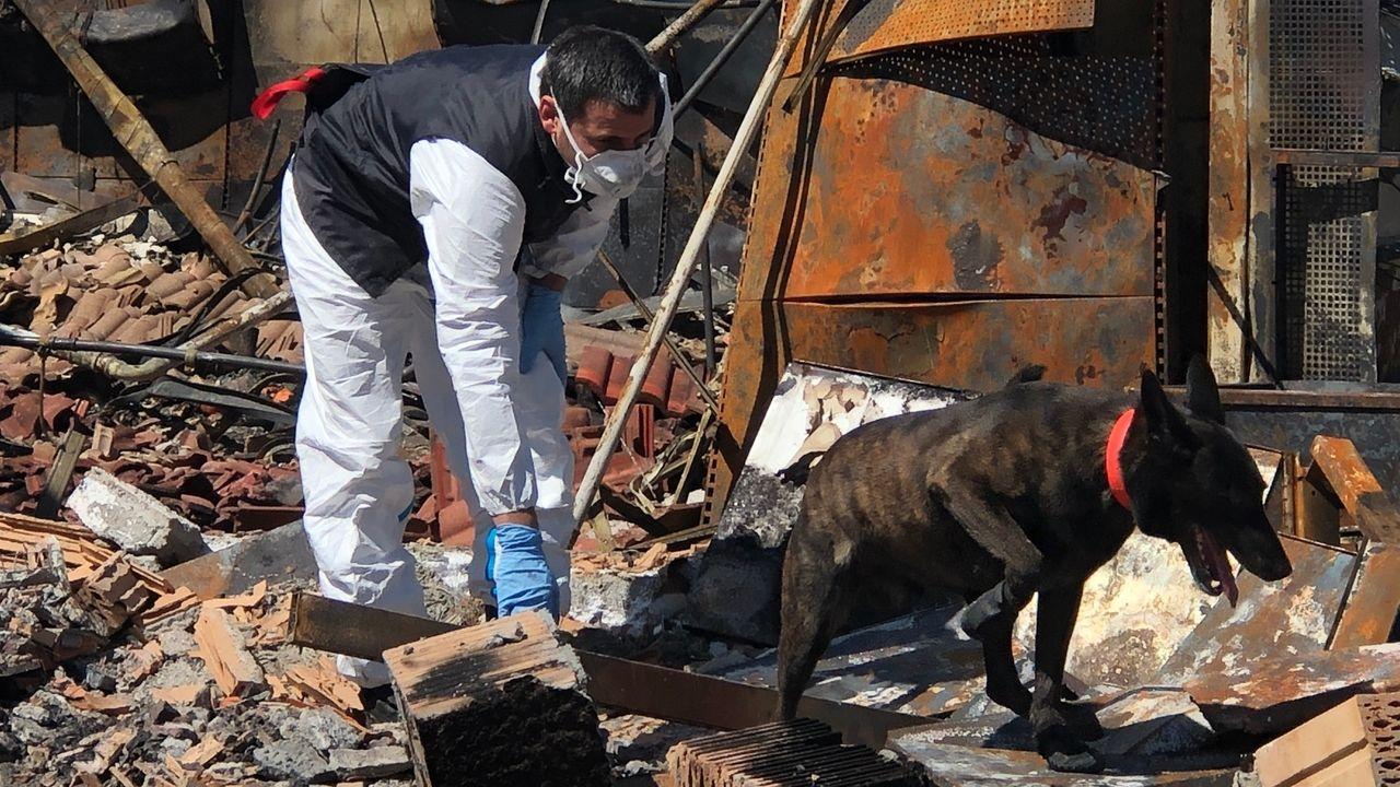 Brandspürhund mit Hundeführer im Einsatz