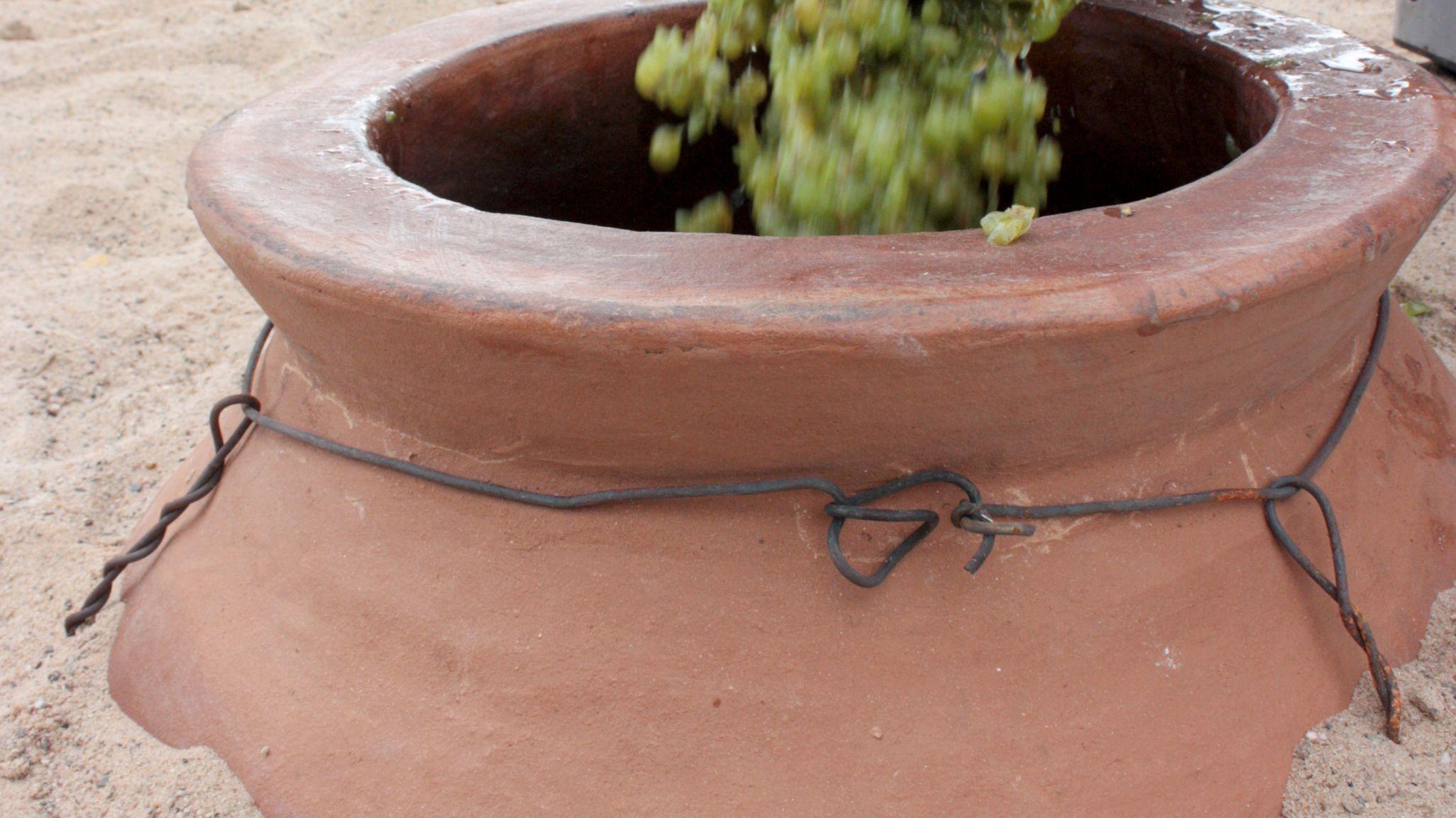 Amphore wird mit Weintrauben befüllt (Symbolbild)