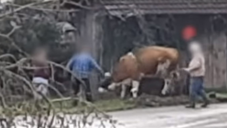 Szene aus dem PETA-Video