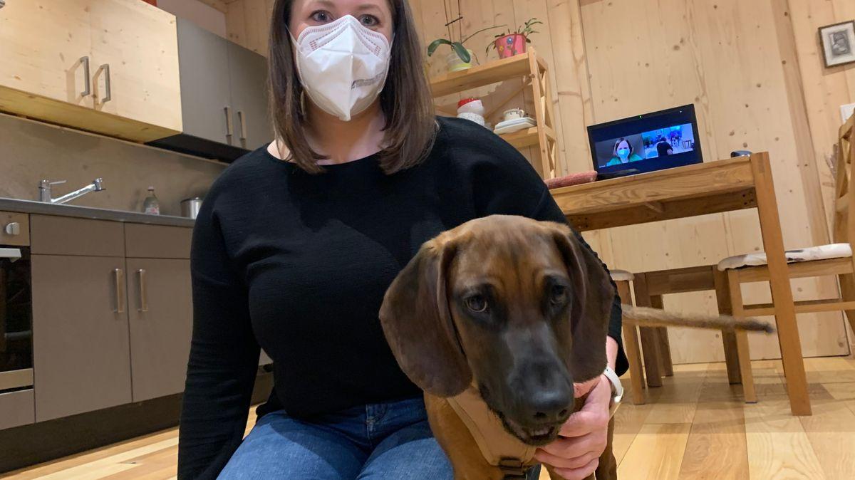 Bild von Hund und Besitzerin mit Laptop im Hintergrund