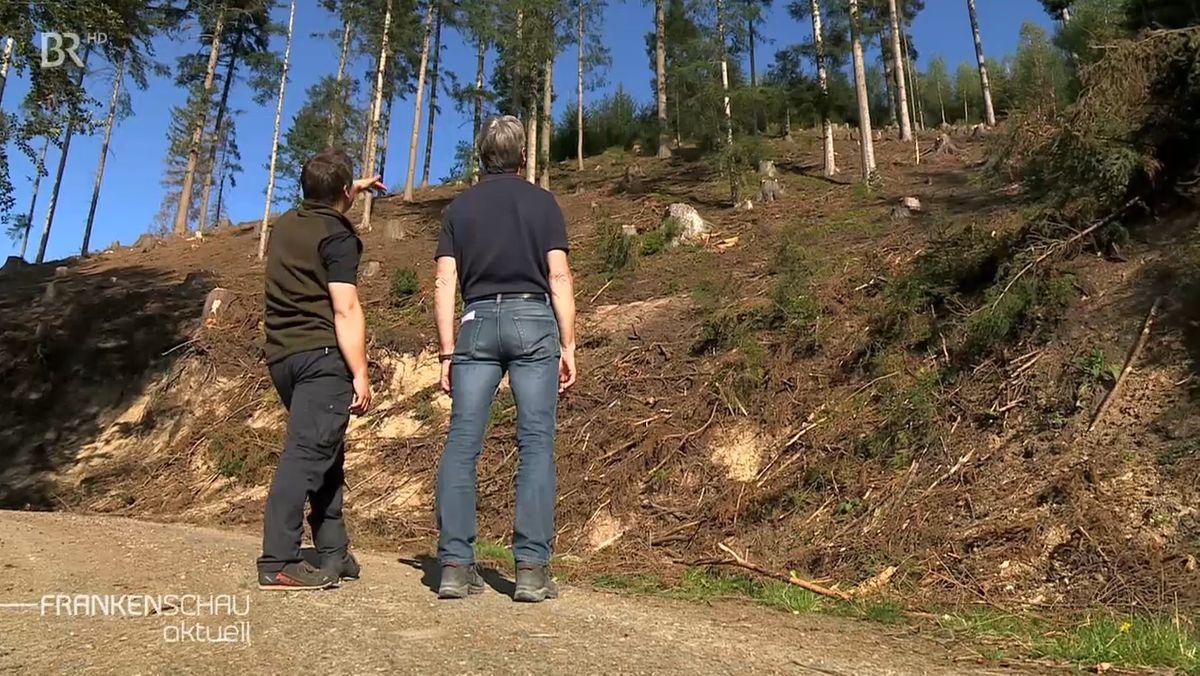 Zwei Männer schauen in ein Waldstück mit nur wenigen Bäumen, die meisten Stämme sind hier bereits gefällt.