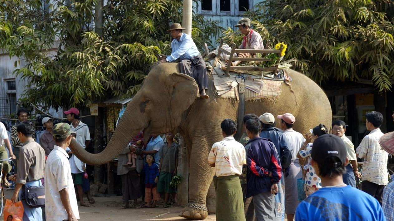 Elefant steht in einer Menschenmenge in Myanmar und wird bestaunt