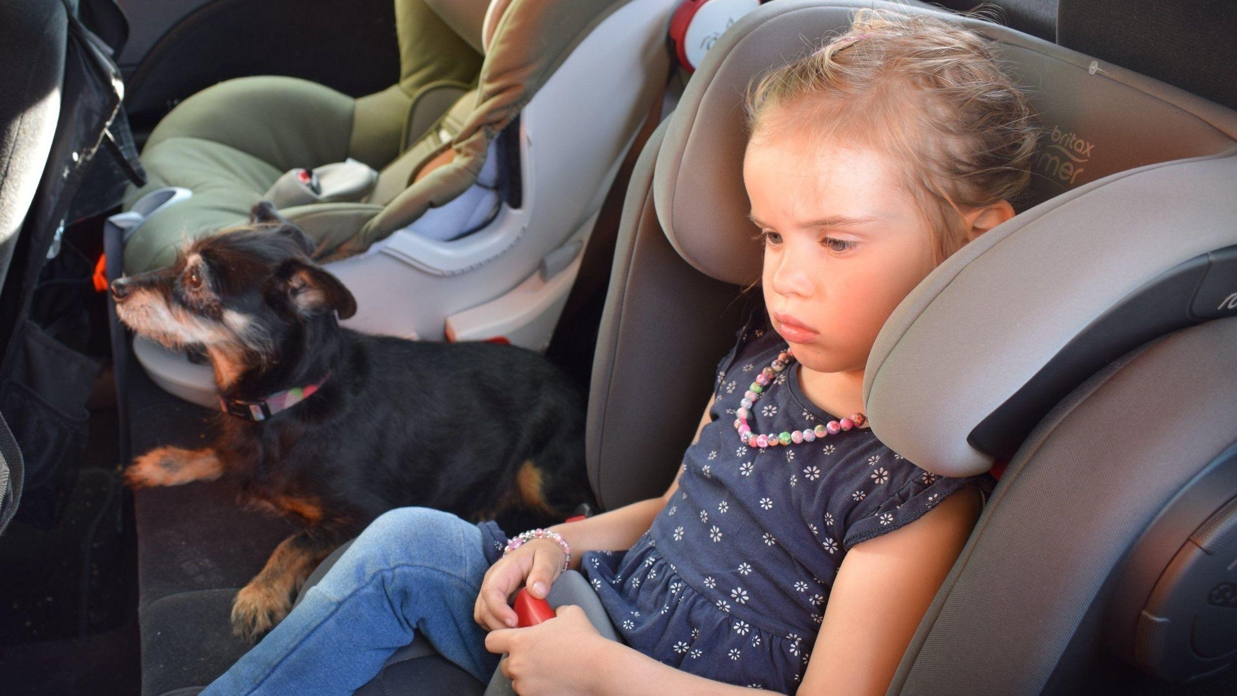 Kind und Hund im Auto