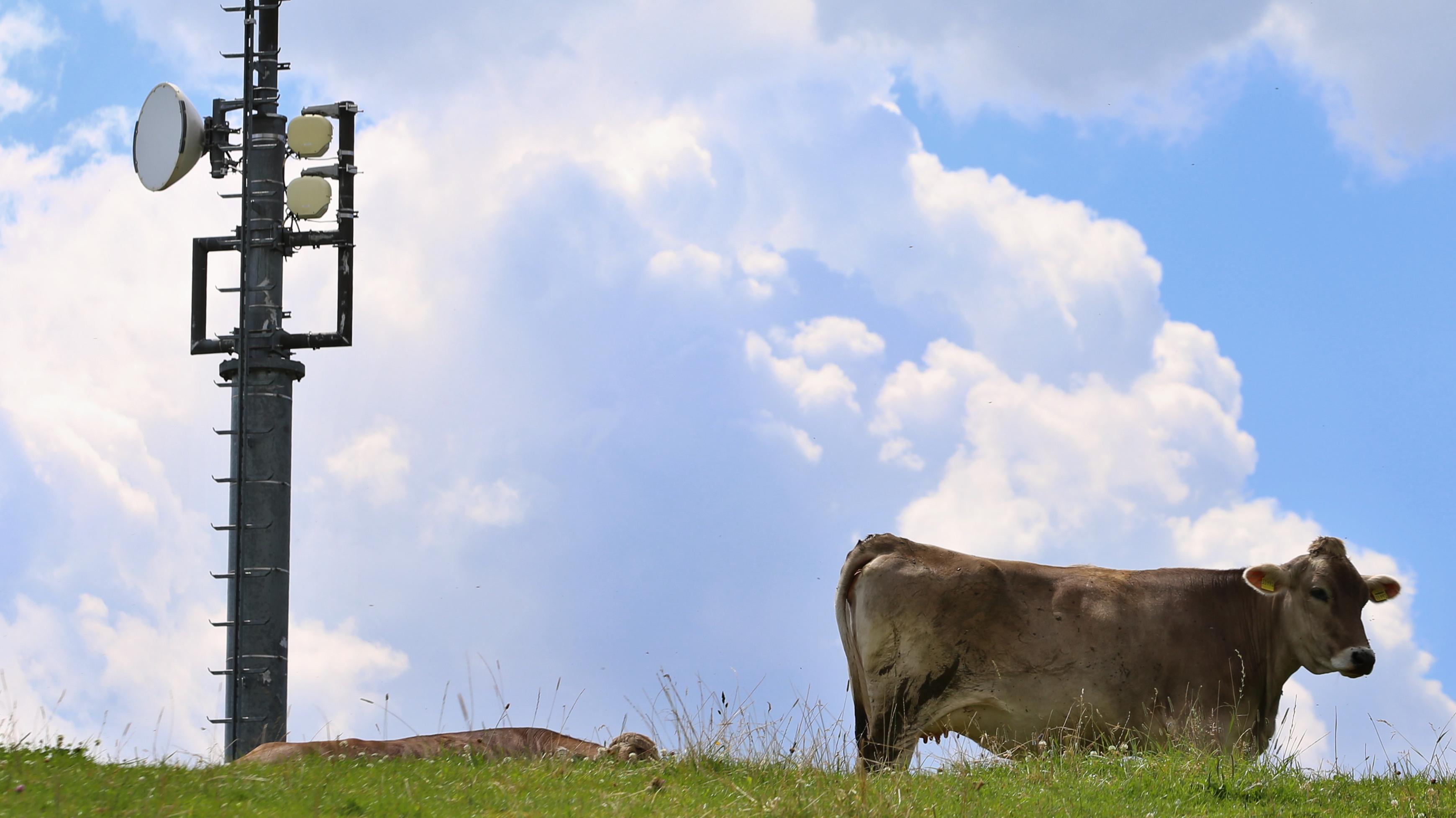 Kuh steht neben Mobilfunkmast