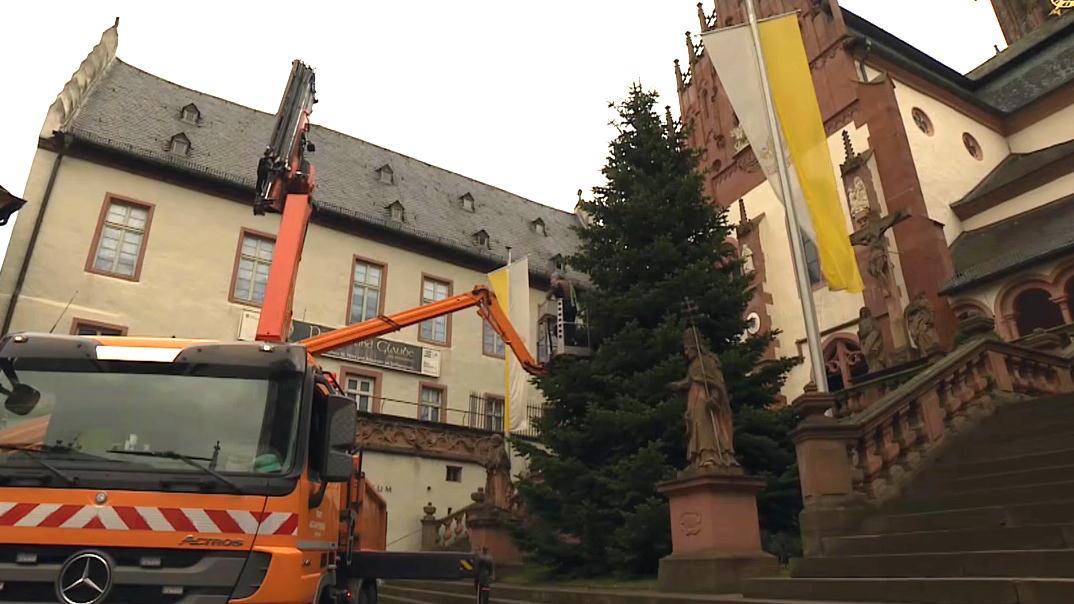 Prachtvoller Christbaum wird von Kran aufgestellt