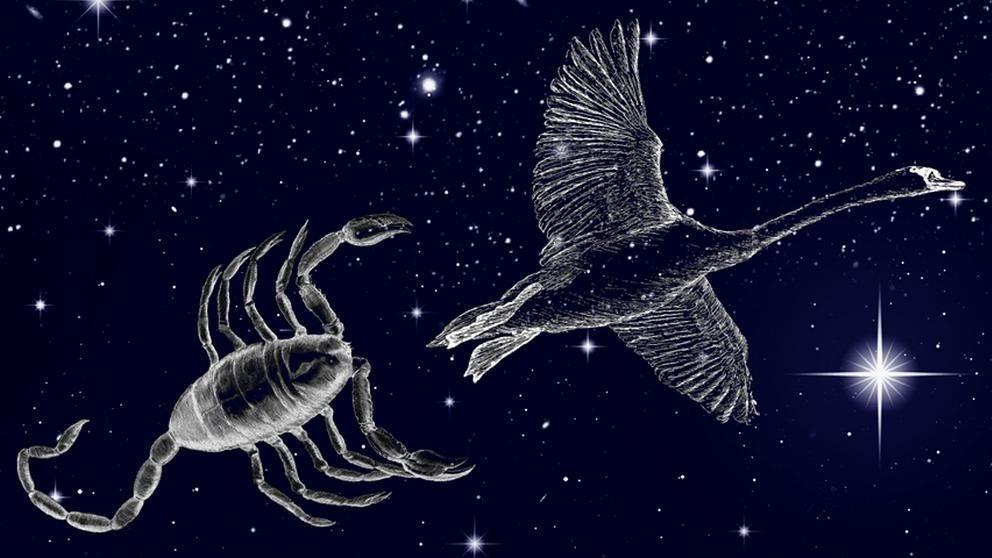 symbolische Darstellung der Sternilder Schwan (Cygnus) und Skorpion (Scorpio) vor dem Sternenhimmel