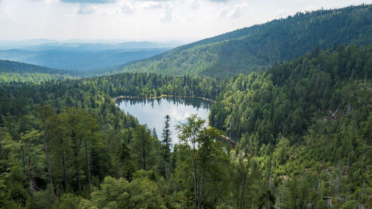 Nationalpark Bayerischer Wald soll um erweitert werden