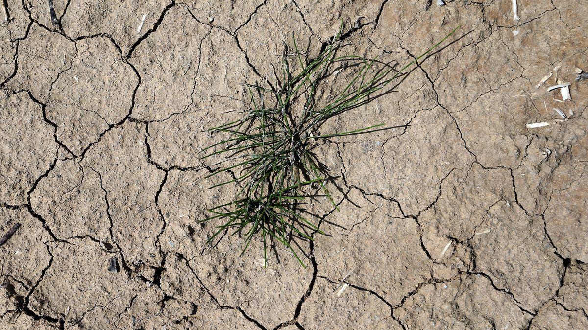 Trockener Ackerboden