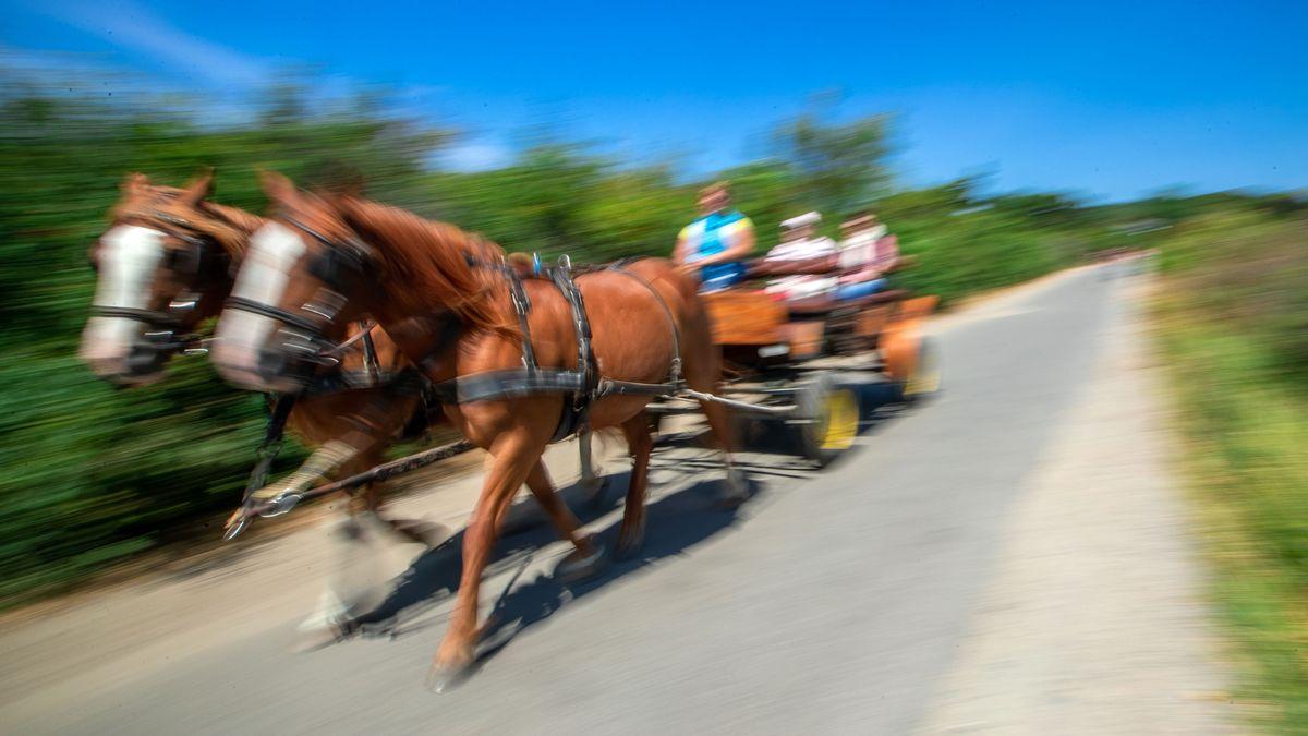 Bei einem Kutschenunfall im Ostallgäu wurde eine 28-Jährige mehrere Meter vom Pferd mitgeschleift.