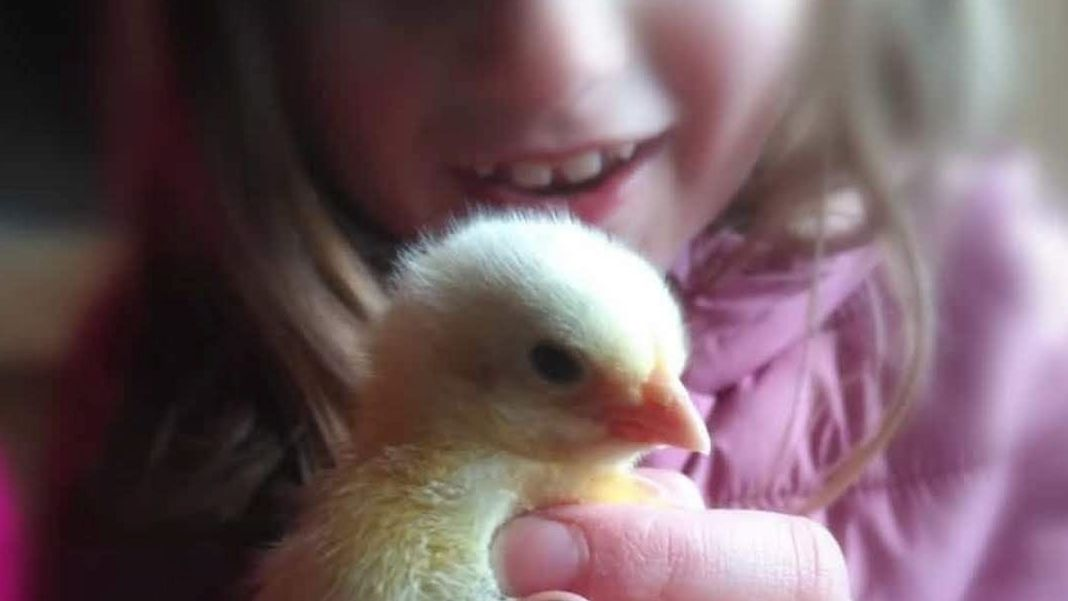 Die elfjährige Elisabeth aus dem Bayerischen Wald züchtet Hühner, anstatt vor dem Computer zu sitzen.