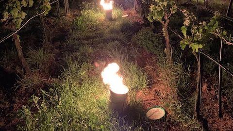Feuertonnen soll die schlimmsten Frostschäden im Weinberg verhindern