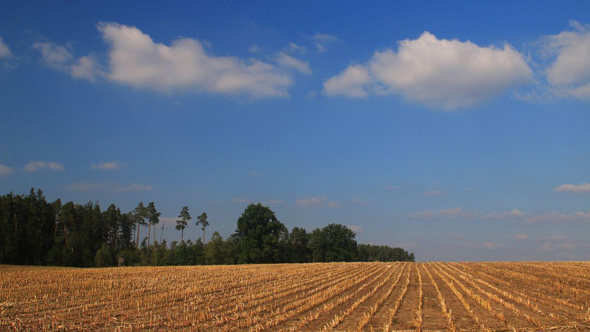 Ein abgeerntetes Feld vor einem Wald