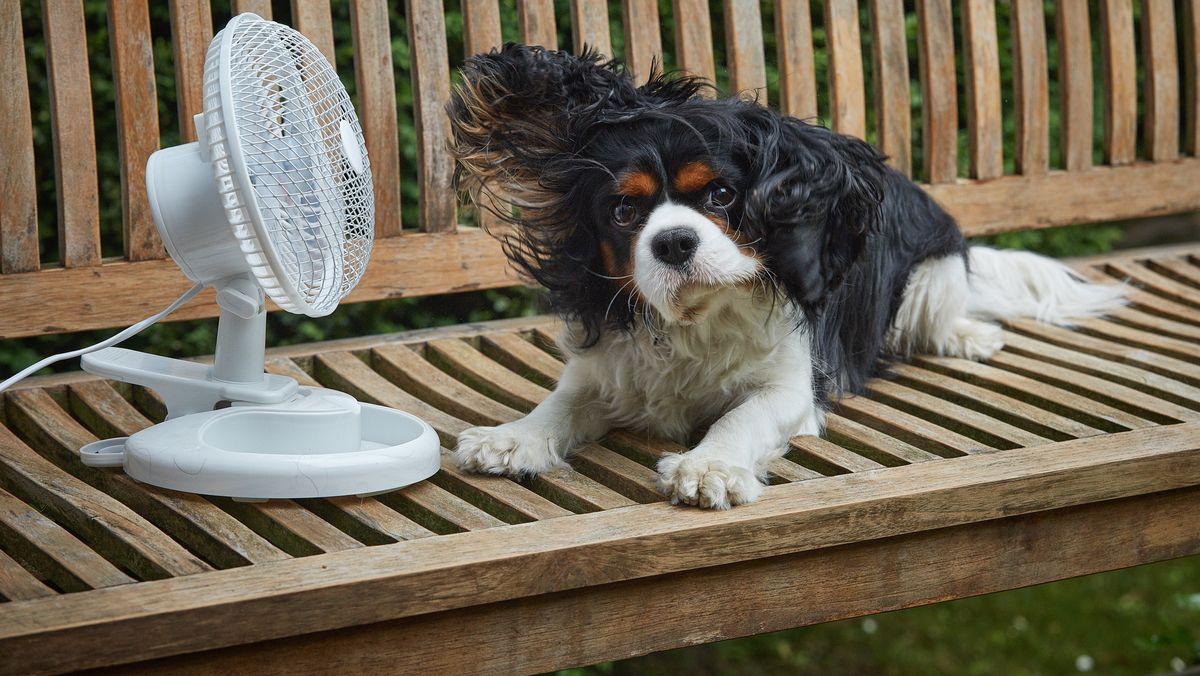 Hund auf einer Bank mit Ventilator