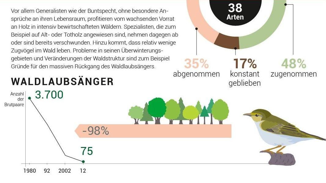 Während der Buntspecht von den Veränderungen im Wald profitiert, leidet der Waldlaubsänger massiv.