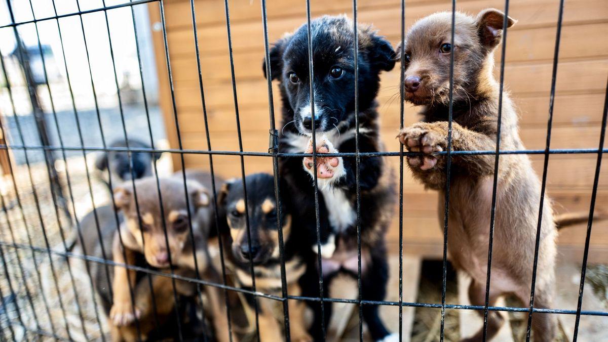 Das Bild zeigt eine Nahaufnahme von Hundewelpen in einem Gehege
