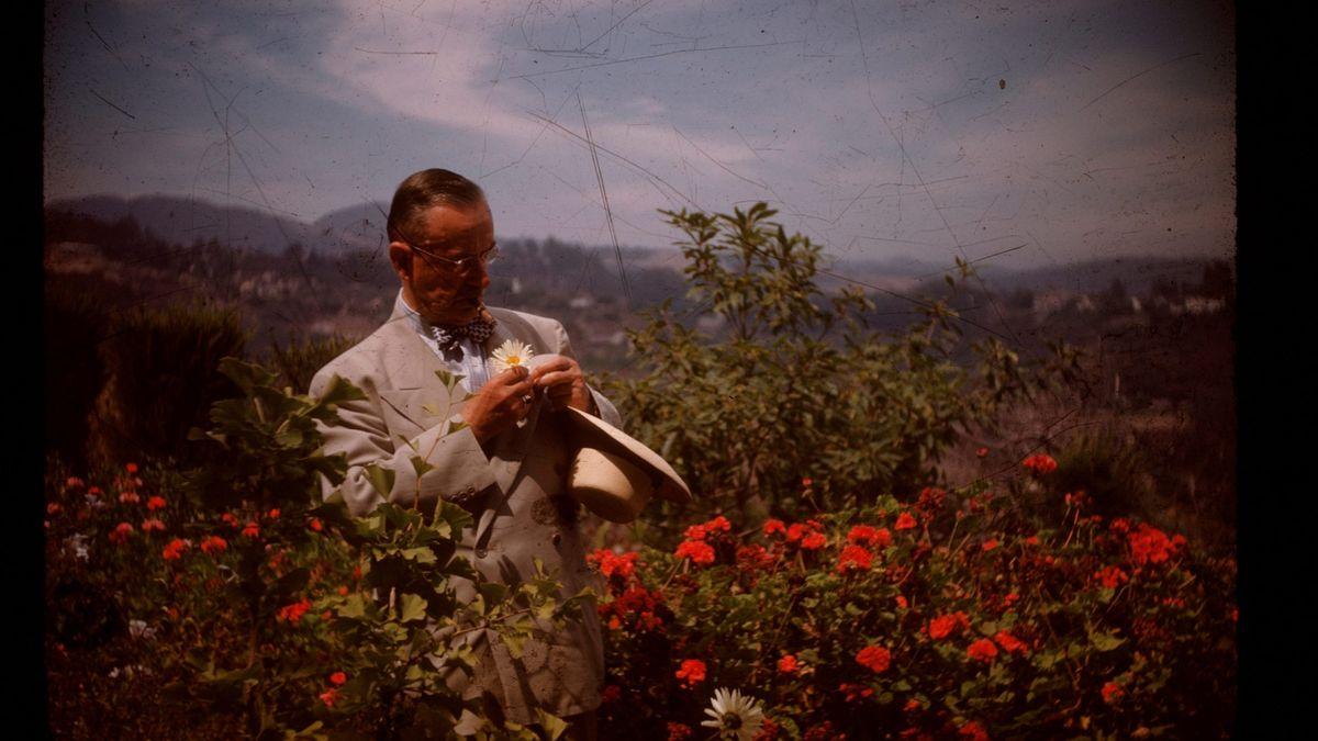 Thomas Mann im hellen Sommeranzug, hält die Blüte einer Margerite in der Hand und betrachtet sie, steht mitten in einem Rosenbusch.