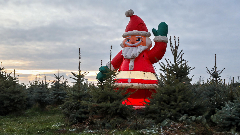 Weiße Weihnachten wird es dieses Jahr nicht geben.