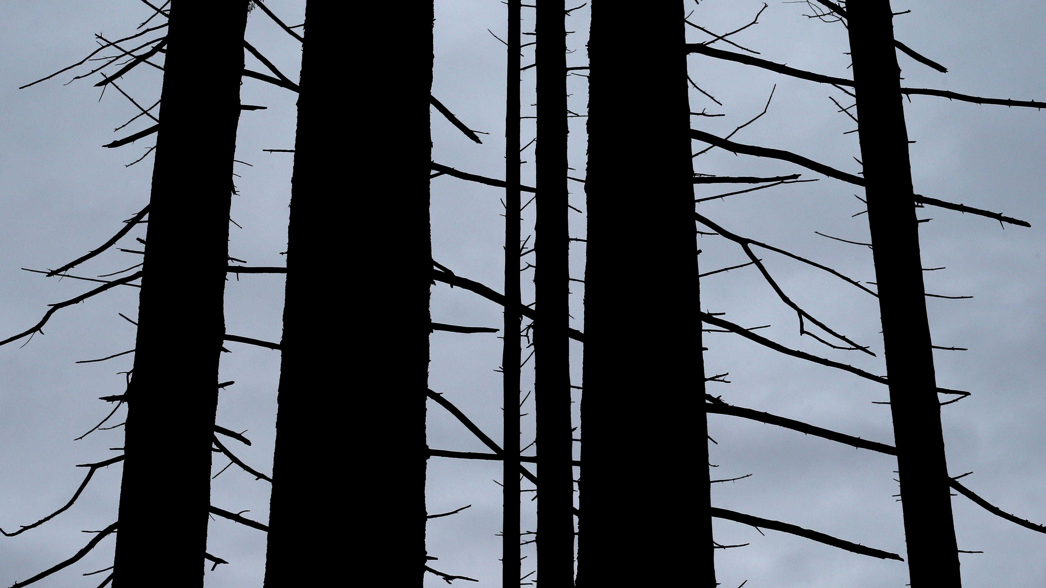 Klimawandel als Grund: Bayerns Wälder leiden